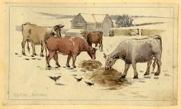 Cattle winter